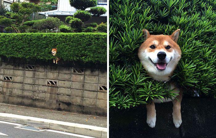 perro en muro