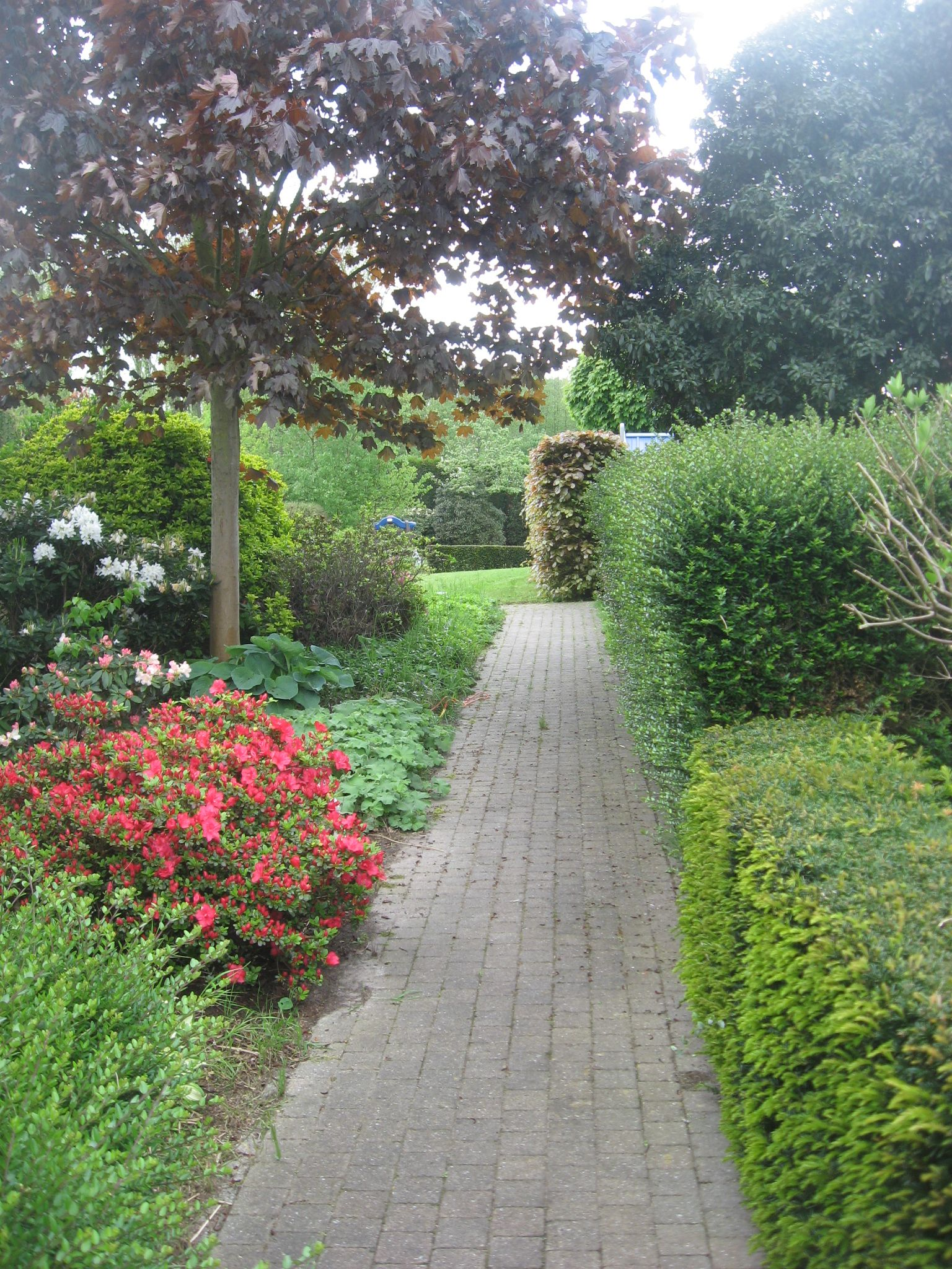 I like the idea of using small hedges to line a walkway. | Amazing ...