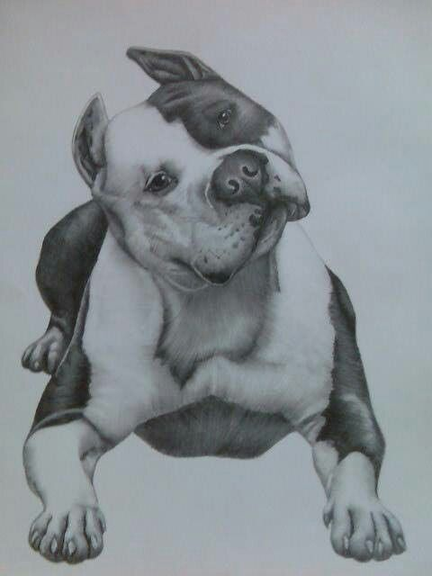 Pit Bulls Pitbull Pitbull Drawing Bull Painting Y Pitbulls