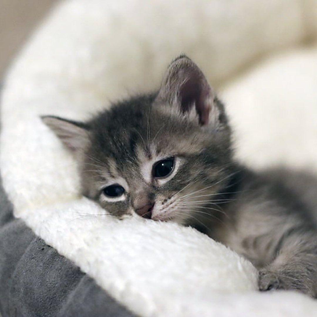 Pin By Vulu Khan On Cat In 2020 Cats Kitten Cat Lovers