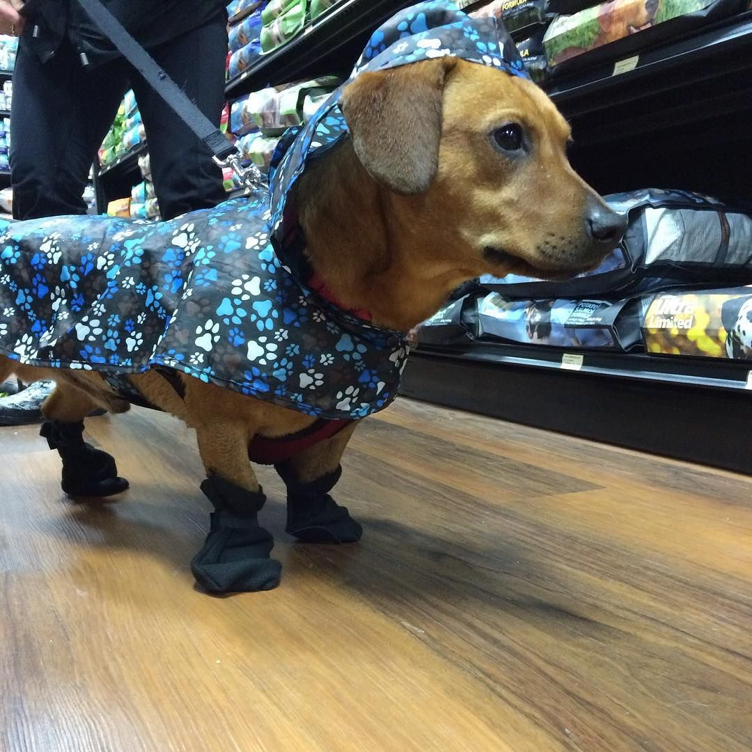 Cutecustomeralert It S Raining It S Pouring But My Rain Coat Is Anything But Boring One Of Our Bestdressedpet Entries From Pets Your Pet Nice Dresses