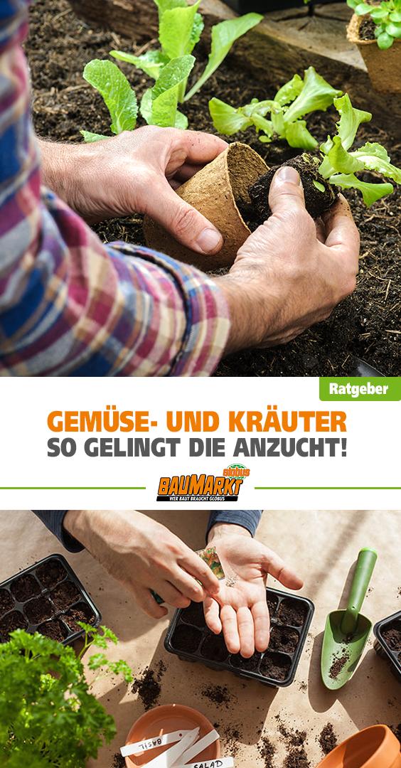 Aussaat von Gemüse und Kräutern in deinem Garten – mit diesen Tipps gelingt dir die Anzucht #anbauvongemüse