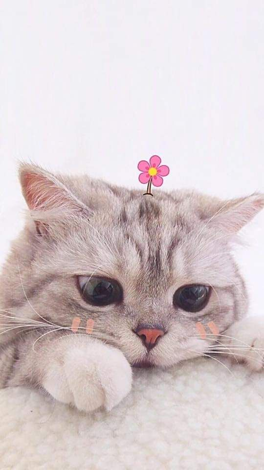 Pin By Nicole Pallares On Lockscreen Wallpapers Backgrounds Cute Baby Cats Cute Cats Cute Animals