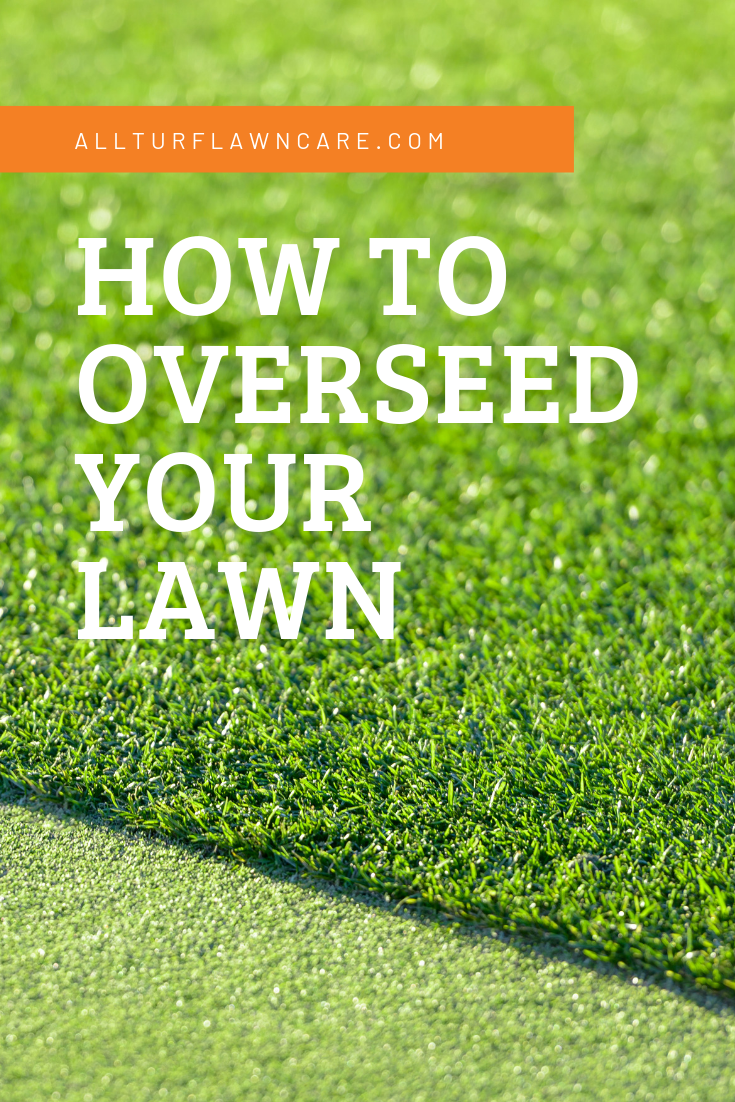 How To Overseed Your Lawn Fescue Lawn Overseeding Lawn