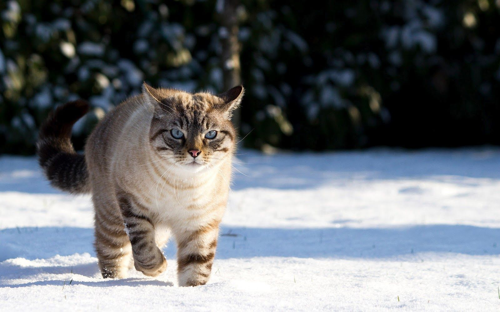 winter cute cat Cute cats and kittens