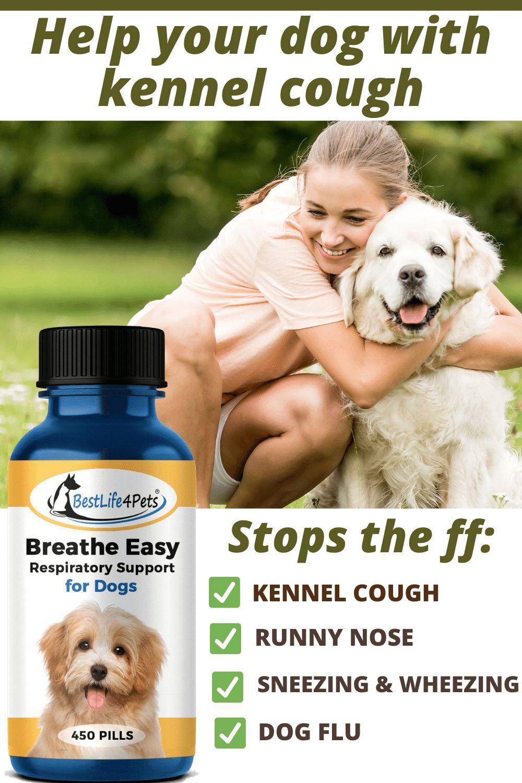 Pin On Dog Respiratory Health