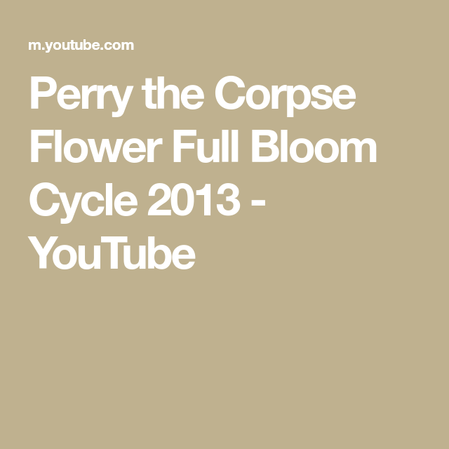 Perry The Corpse Flower Full Bloom Cycle 2013 Youtube Corpse Flower Cycle Corpse