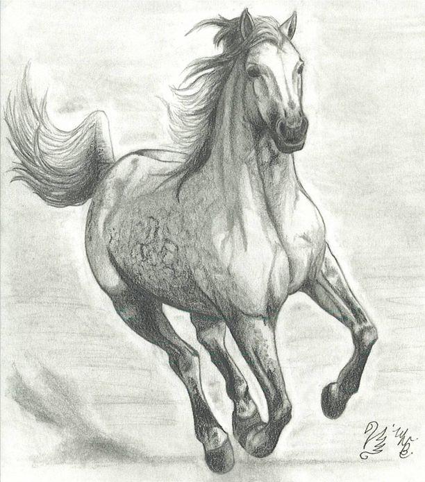 Drawings Of Horses Running Horses Running Drawing Running Horse