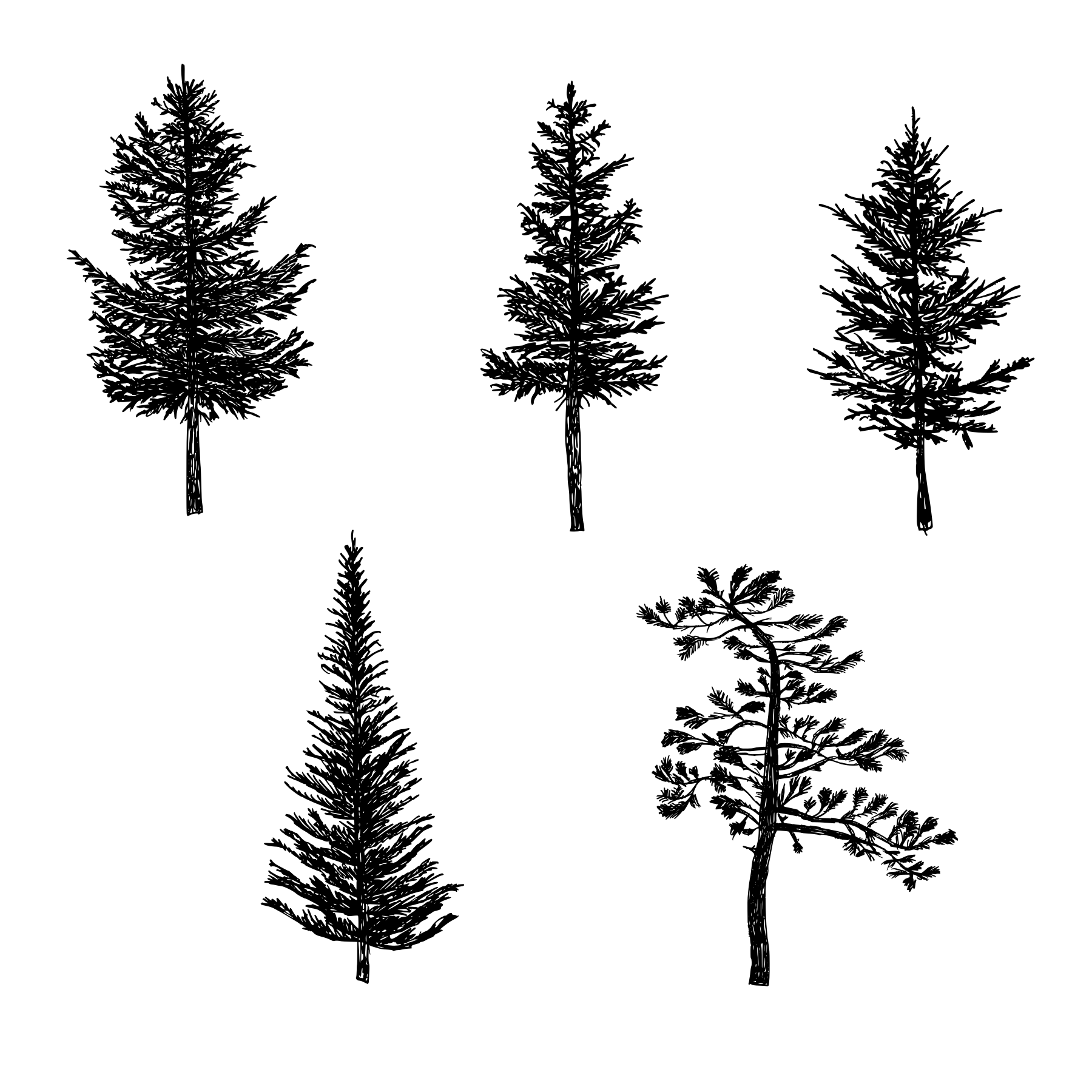 5 Pine Tree Silhouette Drawing Png Transparent Onlygfx Com Pine Tree Silhouette Silhouette Drawing Tree Silhouette