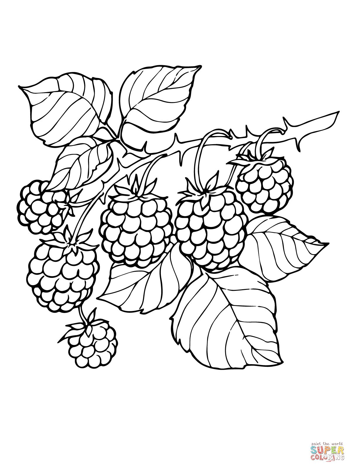 Blackberry Branch coloring page | SuperColoring.com | Food, Drink ...