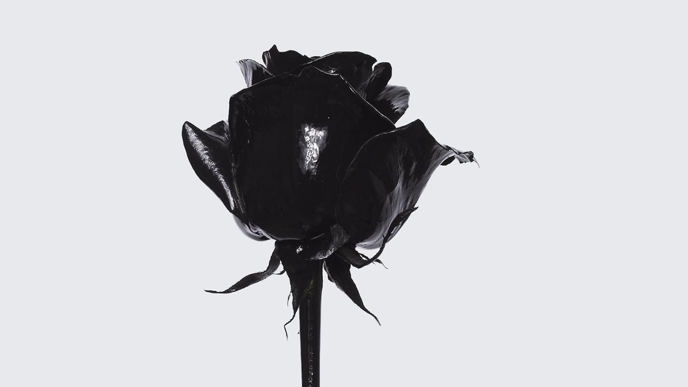 A black rose similar to the color black symbolizes death it is a black rose similar to the color black symbolizes death it is most biocorpaavc Image collections