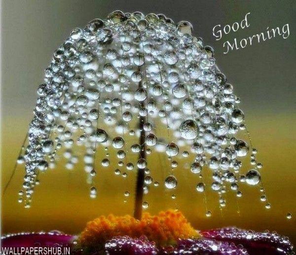 Rain Drops Good Morning Images