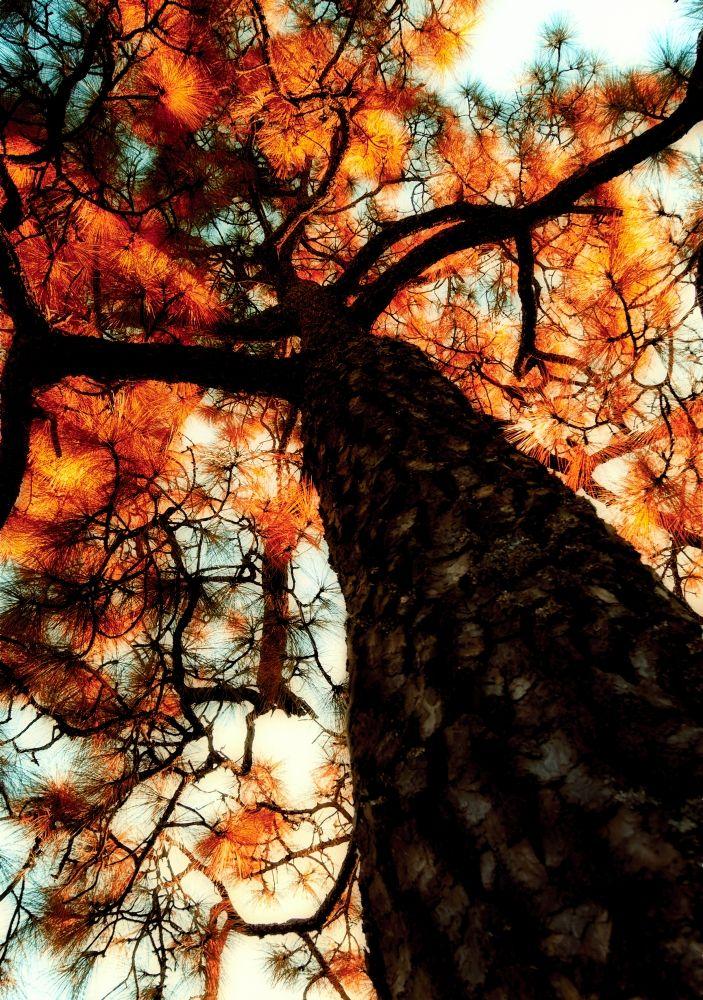 Salvador San Vicente Photographer Abstract nature