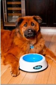 Frobo Cooling Pet Bowl And Charlie Dog Water Bowls Pet Bowls