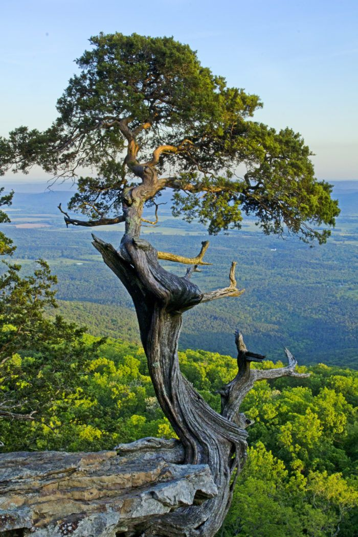 15 Impressive Sights You Can Only See In Arkansas Arkansas Ar Sights Sights