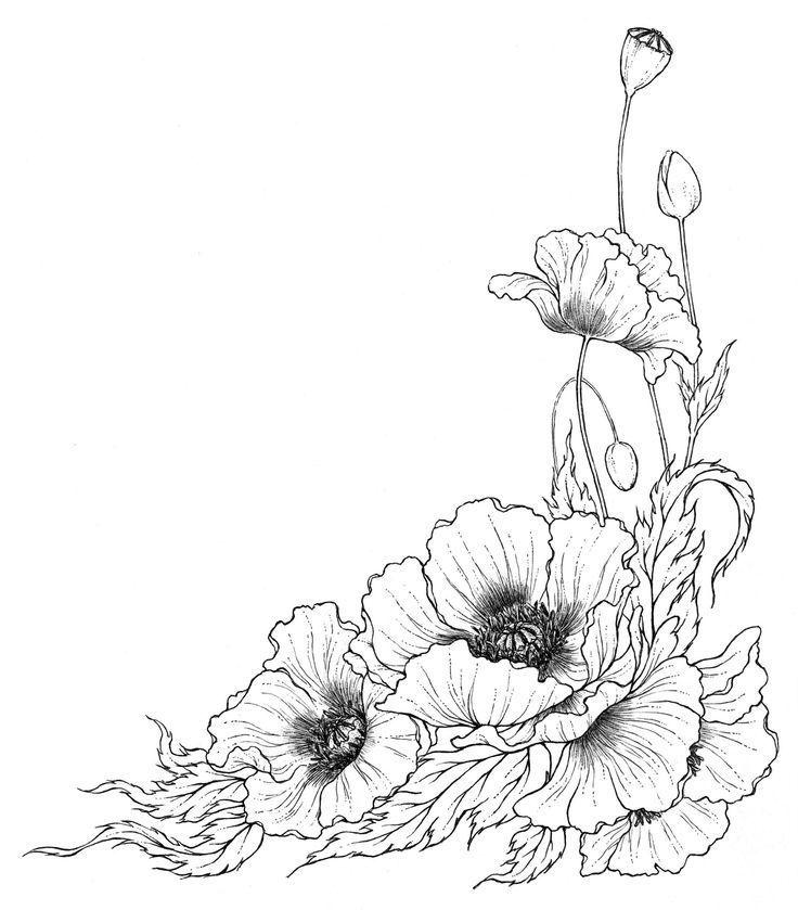 poppy line drawing  jugendstil blumen mohnzeichnung