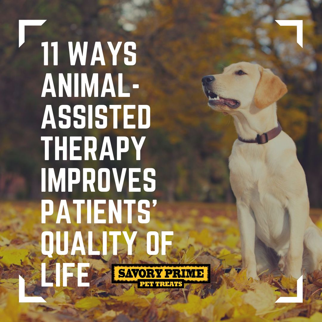 11 Ways Animal-Assisted Therapy Improves Patients' Quality