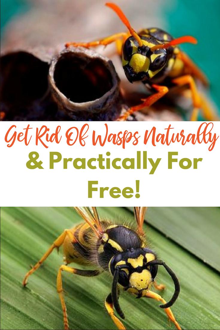 d5fce1228af824740bc2bd83e9126f83 - How To Get Rid Of Bees Flying Around You