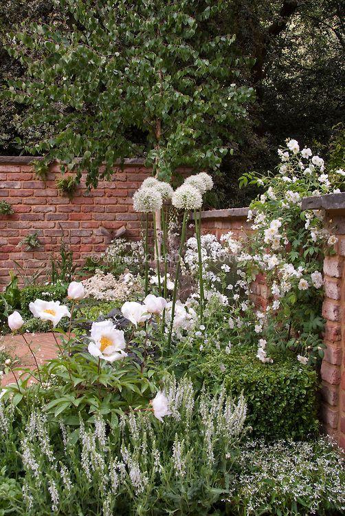 Roses Peony Allium Gardenphotos Com Flower Garden White