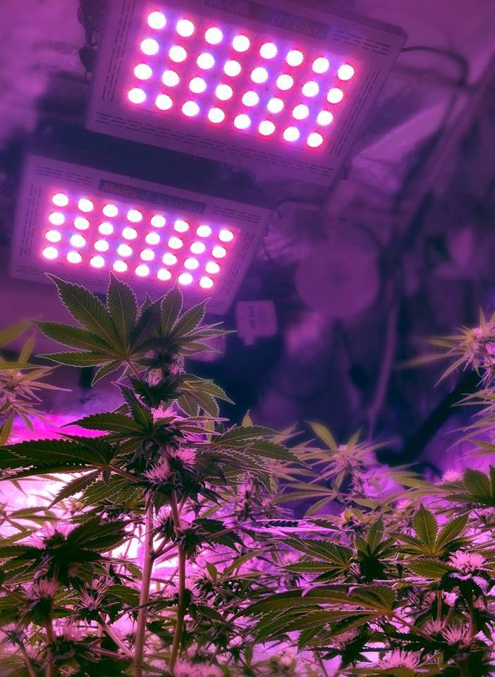 Pin On Led Grow Light For Growing