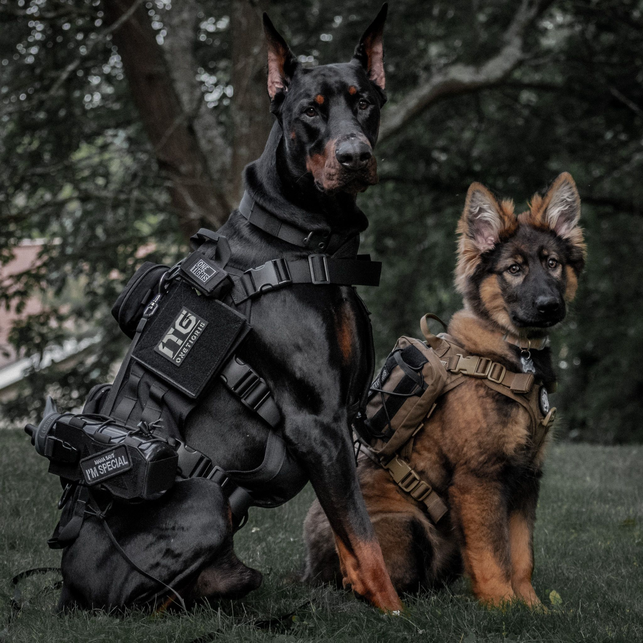 Onetigris Power Rocket K9 Harness Onetigris Tactical Dog Vest With Molle And Grab Handles Military Dogs Doberman Pinscher Dog Dogs