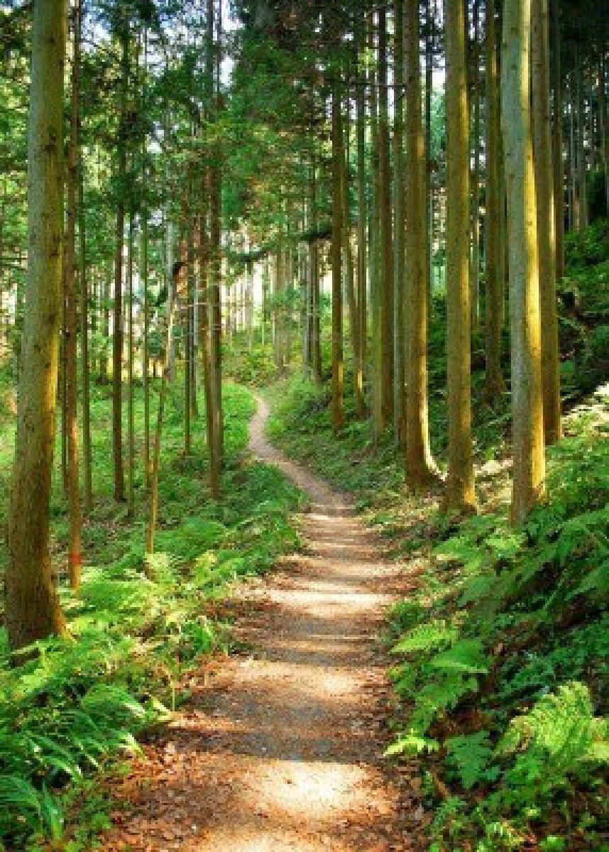 Stock Photo Hiking Trails Nature Trail Summer Hike