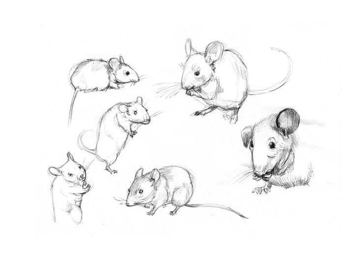 Kelly Murphy Illustration | Secrets At Sea Character ...