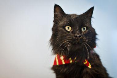 Bow tie kitty