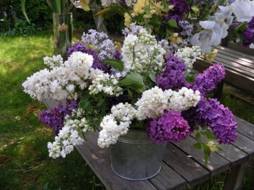 chaque fleur a une signification. voici le guide du langage des