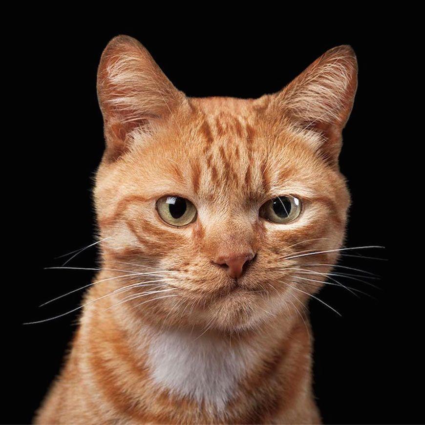 Les personnalités de chiens et chats captées par un talentueux photographe  | Chat roux, Chien chat, Animaux