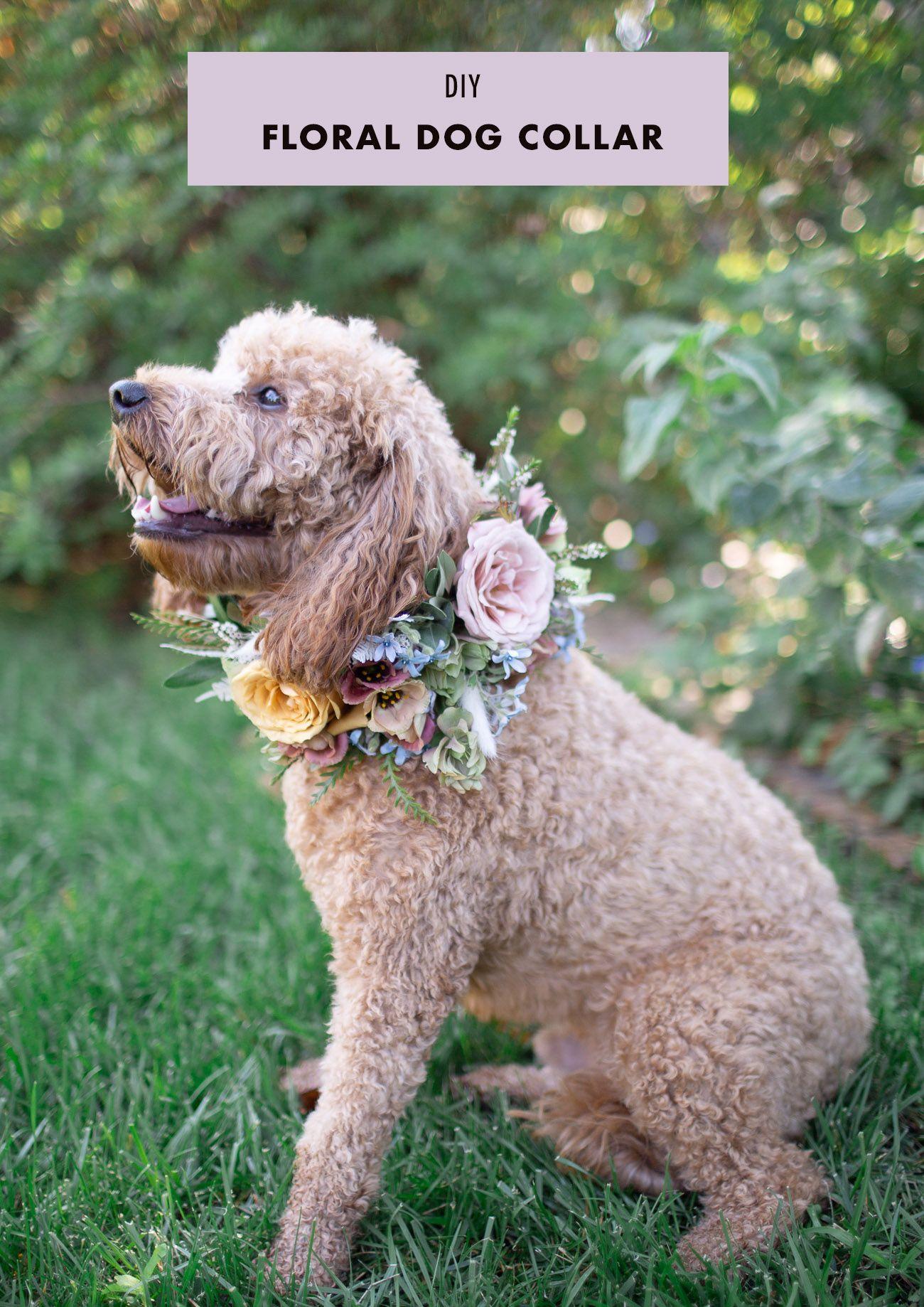 Diy floral dog collar green wedding shoes floral dog