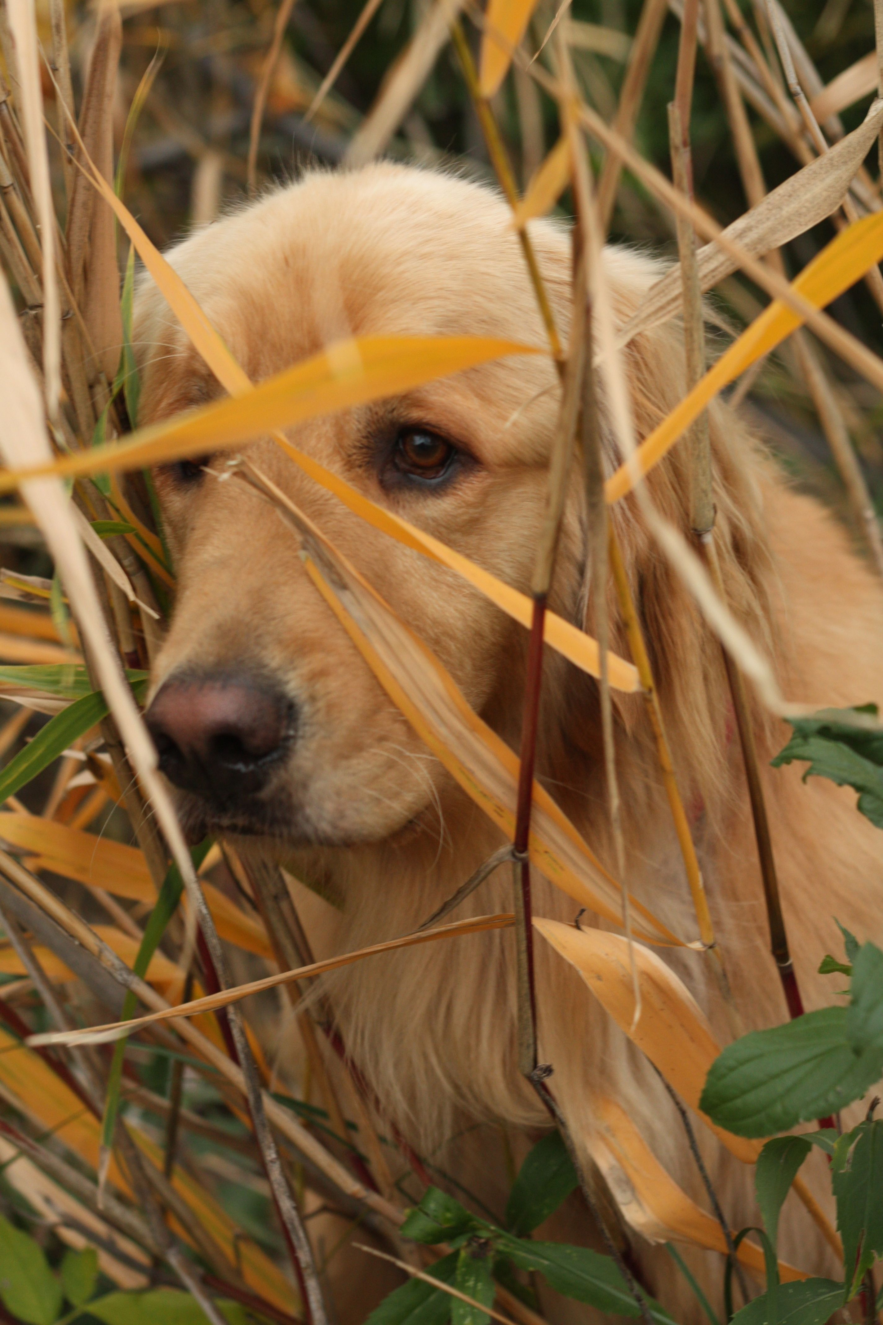 ...Hiding in the grasses... (With images) Dog love, Most