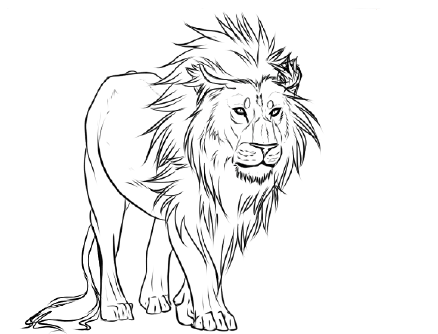 Lion Lines by Yamimaru on deviantART Lion drawing, Lion