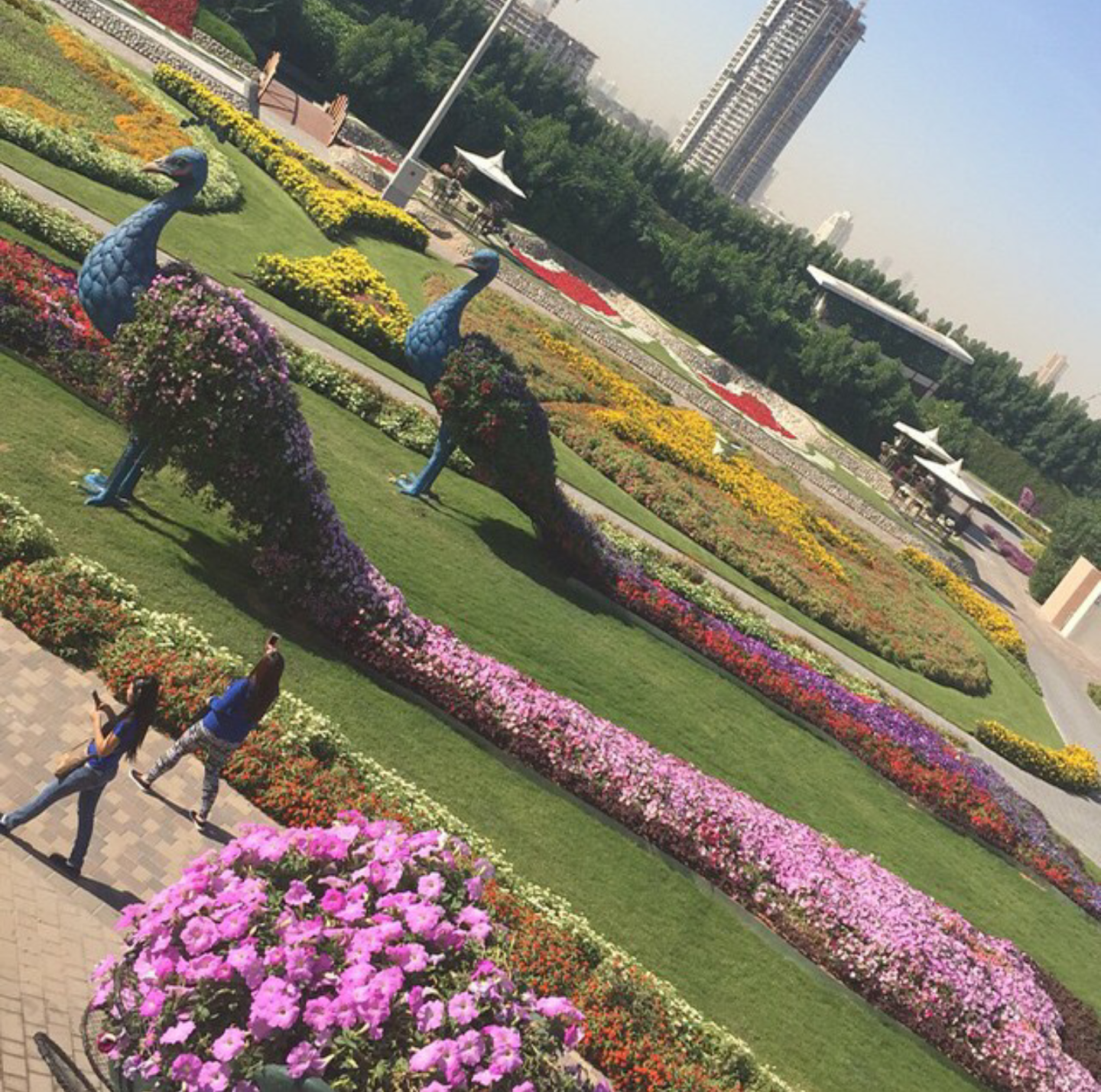 Dubai Miracle garden is the largest vertical garden in the