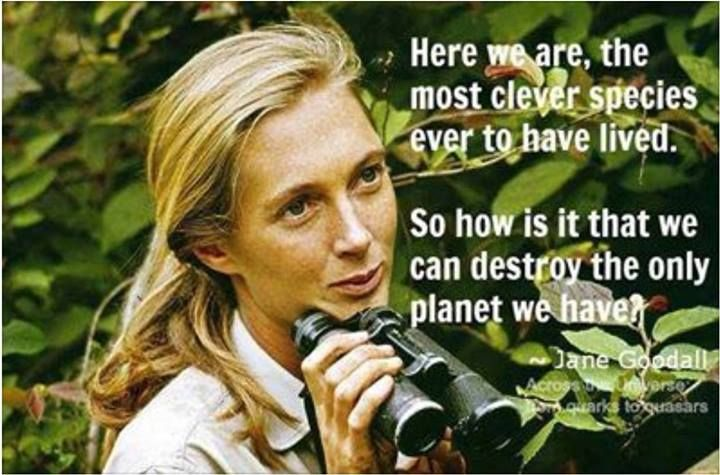 """Here we are..."""" Jane Goodall [720x475] QuotesPorn via"""