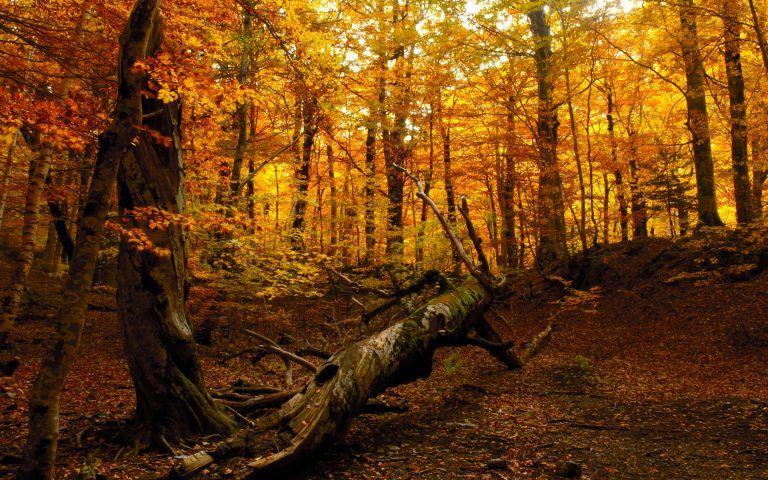 Autumn Forest Wallpaper Hd In 2020 Autumn Forest Fall Wallpaper Forest Wallpaper
