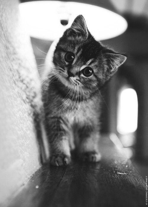 baby cat :)