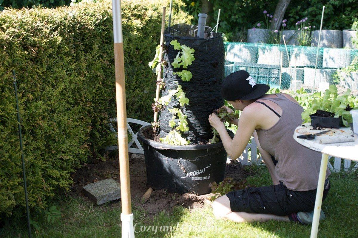 Schnecken Naturlich Bekampfen Salat Im Salat Turm Anleitung Garten Gemuse Anpflanzen Garten Pflanzideen