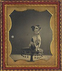 Dog Sitting on a Table, American, about 1854