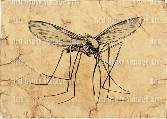 Digital printable vintage mosquito insect drawing diagram black digital printable vintage mosquito insect drawing diagram black white illustration retro graphic clipart scrapbook image ccuart Image collections
