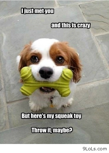 cute dog sayings - Funny Pictures, Funny Quotes, Funny