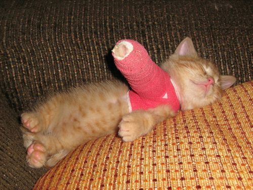 This poor little kitten had to get a cast :(