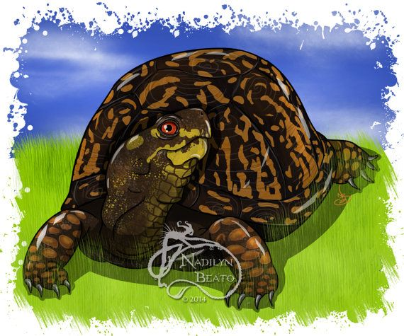 Eastern Box Turtle Daily Creature Print by