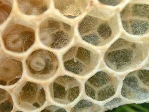 Official Website of Mid-State Beekeepers Association, Educate beekeepers. Honey bee colony management for beginner & advanced beekeeper. Feeding, pest control, honey production. Increase public knowledge on honey bee crisis.