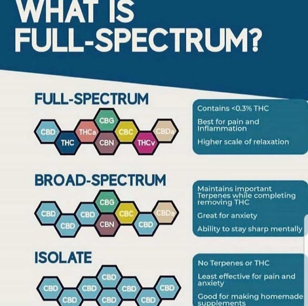 CBD Isolate vs. Full Spectrum: Not ...kushiebites.com