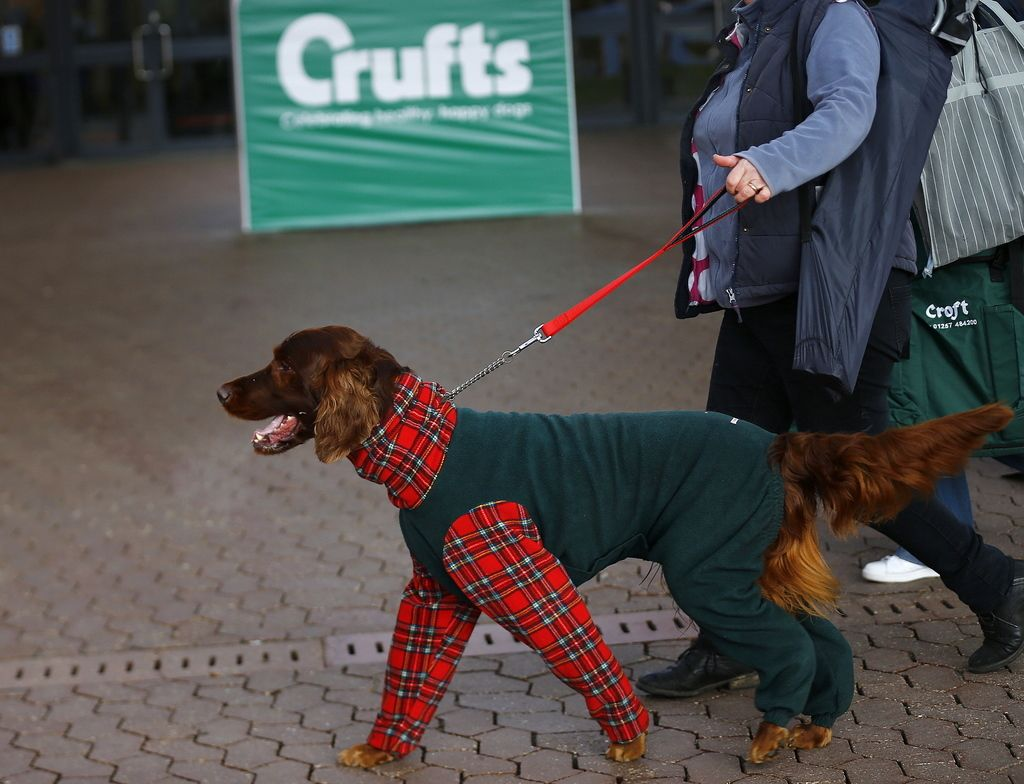 Crufts Dog Show in Birmingham, central England, March 5, 2015