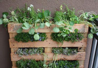kiertoidea - recycled ideas: Kuormalavasta kasvualusta kasveille - How to turn a pallet into a garden