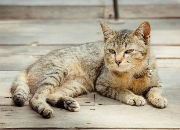 Does your cat have dementia, or is it just old age? Here's