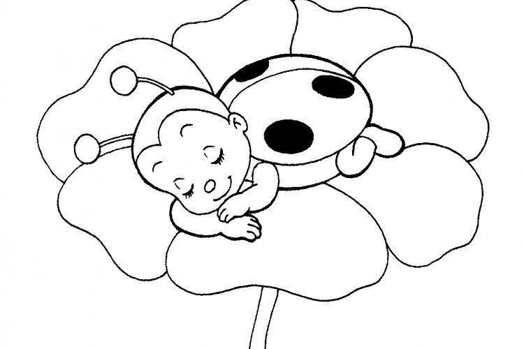 Sheet to Print Cute <b>Ladybug</b> <b>Coloring</b> <b>Page</b> Free ...