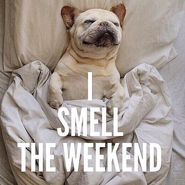 I smell the weekend (source: pinterest) | French bulldog